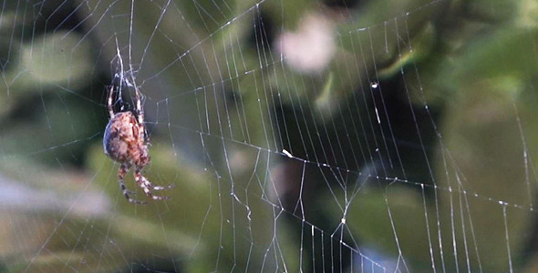 Spider On Forest Web 1