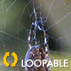 Spider On Forest Web - 2 - VideoHive Item for Sale