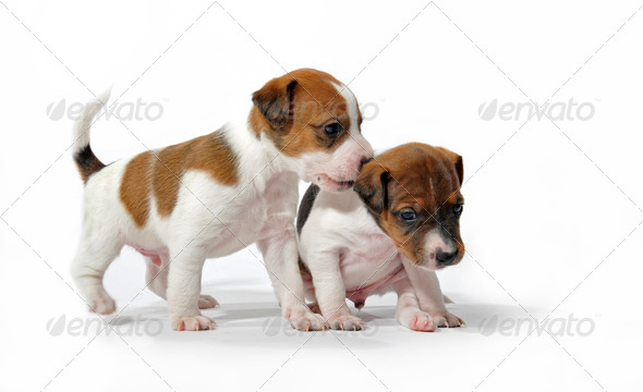 playing puppies - Stock Photo - Images
