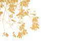Multicolor foliage background - PhotoDune Item for Sale