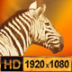 Group of Zebra and Antelope - 11