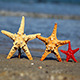 Three Starfish - VideoHive Item for Sale