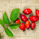 Rosehips with green leaves - PhotoDune Item for Sale