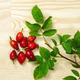Rosehip berries with green leaves - PhotoDune Item for Sale