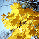 Autumn Leaves Rustling In The Wind 24 - VideoHive Item for Sale