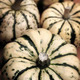 Organic pumpkins - PhotoDune Item for Sale