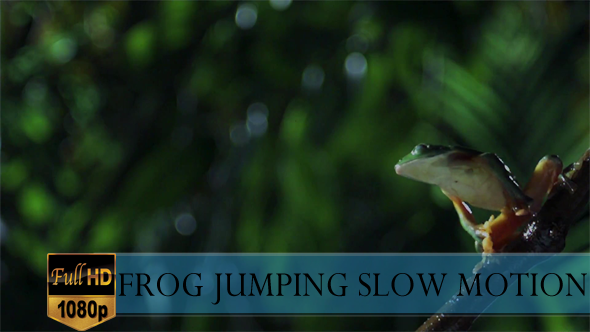 Frog Jumping Slow Motion