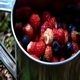 Berries 1 - VideoHive Item for Sale