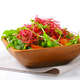 Mixed green salad with pea and beetroot sprouts - PhotoDune Item for Sale