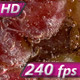 Bunch of Grapes in Soda Water - VideoHive Item for Sale