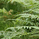 Ferns in the Forest - VideoHive Item for Sale