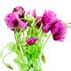 poppy flower - PhotoDune Item for Sale