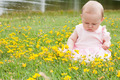 baby and buttercups - PhotoDune Item for Sale