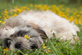 puppy is playing with the flowers - PhotoDune Item for Sale