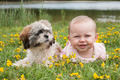 Baby and puppy in the field with buttercups - PhotoDune Item for Sale
