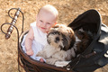 Baby and puppy in vintage pram - PhotoDune Item for Sale