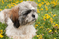 portrait of a puppy - PhotoDune Item for Sale