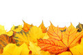 Autumn yellow and red leaves on white background. - PhotoDune Item for Sale