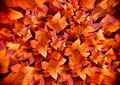 Autumn Leaves. Fall Background. Color Explosion - PhotoDune Item for Sale