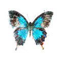 Watercolor Image Of Tropical Butterfly - PhotoDune Item for Sale