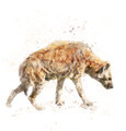 Watercolor Image Of Spotted Hyena - PhotoDune Item for Sale