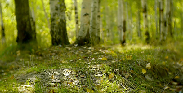 Green Grass In The Forest 5
