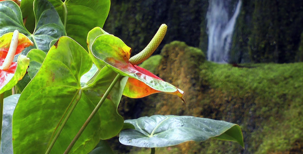 Tropical Flowers and Waterfall