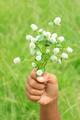 Hand holds white globe amaranth - PhotoDune Item for Sale