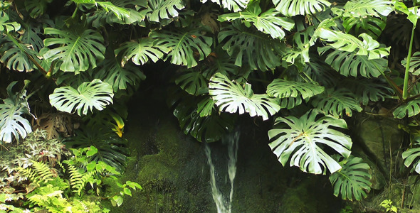 Tropical Plant and Waterfall 2