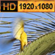 Birds Hanging in a Nest Tree 02 - VideoHive Item for Sale