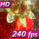 Strawberries Falling into a Glass - VideoHive Item for Sale