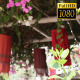 Chinese Garden Cafe 2 - VideoHive Item for Sale