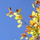 Autumn Foliage 4 - VideoHive Item for Sale