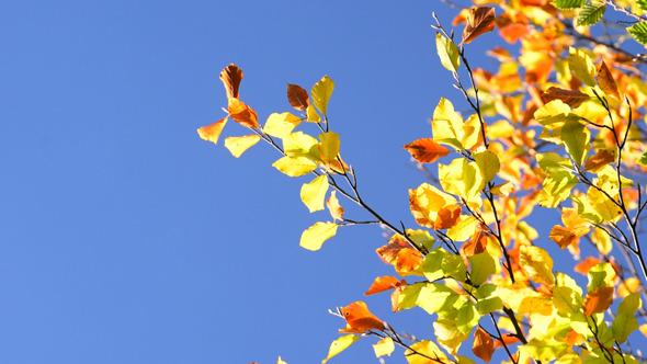 Autumn Foliage 4