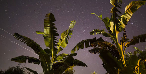 Stars & banana trees Sunrise Africa