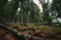 Deciduous forest with fallen tree