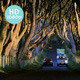 Drive The Dark Hedges - VideoHive Item for Sale