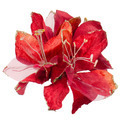 Red Christmas decoration - PhotoDune Item for Sale