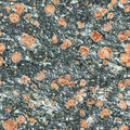 Seamless texture - surface of natural stone with red spots - PhotoDune Item for Sale