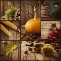 Autumn collage - PhotoDune Item for Sale