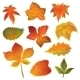 Autumn Leaves Set on the White Background - GraphicRiver Item for Sale