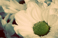 Close-up of young fresh flowers in spring. Vintage - PhotoDune Item for Sale