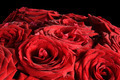 Red wet roses flowers isolated on black background. - PhotoDune Item for Sale