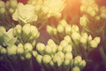 Close-up of young fresh flowers growing on a spring morning meadow, - PhotoDune Item for Sale