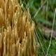 Wild Mushrooms 12 - VideoHive Item for Sale