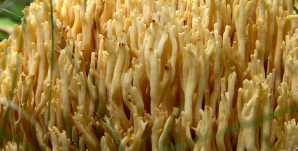Wild Mushrooms 13