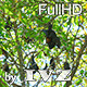 Flying Foxes - VideoHive Item for Sale