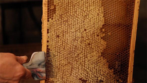 Beekeeper Unseal Honeycomb