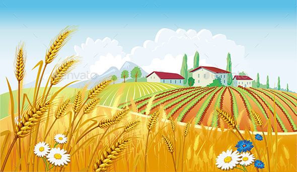 GraphicRiver Rural Landscape with Wheat 9084555