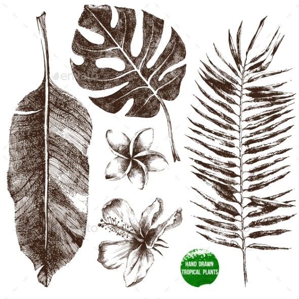 GraphicRiver Hand Drawn Tropical Leaves and Flowers 9088162